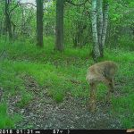 Spypoint Trail Camera Pictures