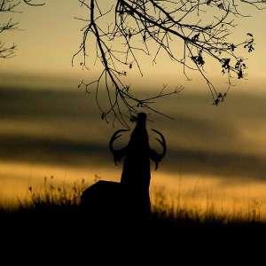 early season deer hunting