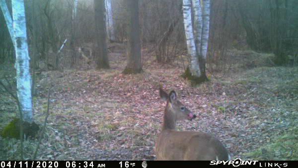 Mineral Site Deer Feed